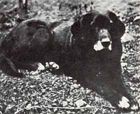 Perro de agua de San Juan
