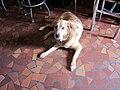 St Roch Tavern Dog.JPG