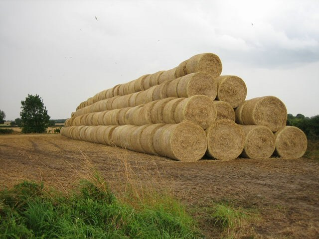 Stacks and stacks of bales - geograph.org.uk - 566481