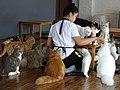Staffer Feeding Felines - Cat 'n' A Cup Cafe - Chiang Rai - Thailand (35282027905).jpg