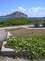 Starr-040711-0101-Coccinia grandis-habit-Makapuu-Oahu (24596251752).jpg