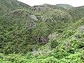 Starr-110924-9334-Musa x paradisiaca-Maia Maoli habit-Makamakaole-Maui (24485016863).jpg