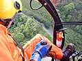 Starr-141014-2177-Caesalpinia decapetala-aerial view-Kakipi Gulch Haiku-Maui (25220904106).jpg