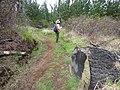 Starr-170225-0019-Rubus niveus-trail reroute with Kim-Lower Waiohuli Trail Polipoli-Maui (32998684220).jpg