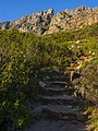 Start of Table Mountain trail, Cape Town.jpg