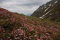 Steirischekalkspitze0176.JPG