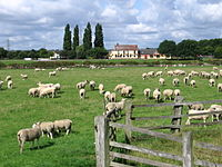 Stoke Bardolph - Ferry Boat Inn (from Shelford side of River Trent).jpg