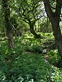 Stream and woodland, Badminston Common - geograph.org.uk - 438633.jpg