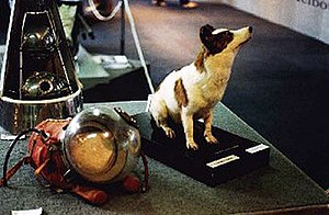 Soviet space dogs - Strelka on tour, in preserved form, in Australia in 1993