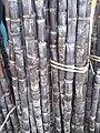 Sugarcane of Salem.jpg