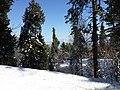 Sun and snow in Murree 2015 .jpg