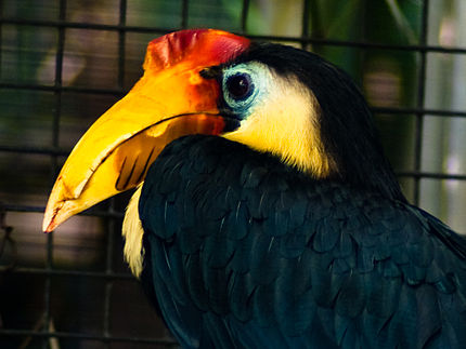 A Field Guide to the Birds of Borneo Sumatra Java and Bali The Greater Sunda Islands
