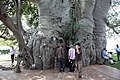Sunland Baobab, Limpopo, South Africa (5613316944).jpg