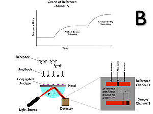 Surface plasmon resonance - Surface Plasmon Resonance (SPR) Operations B