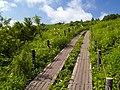 Swamp - panoramio.jpg
