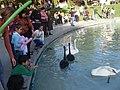 Swan Lake, Yerevan 10.jpg