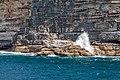 Sydney (AU), Coast, New Zealand sea lions -- 2019 -- 3450.jpg