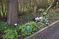 TU Delft Botanical Gardens 43.jpg