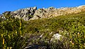 Table Mountain summit through break in fynbos.jpg