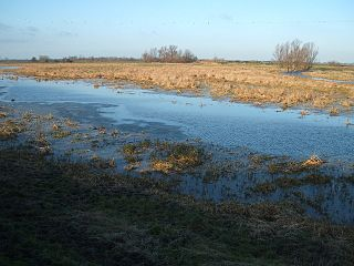 Cam Washes hectare biological Site of Special Scientific Interest west of Wicken in Cambridgeshire