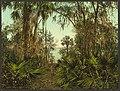 The St. Johns River, Florida-LCCN2008678232.jpg