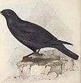 The birds of Europe (1837) (14565308900).jpg
