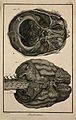The brain, after Haller and Ridley. Engraving by Prevost, 17 Wellcome V0007829ER.jpg