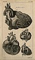 The heart; four figures. Engraving by T. Jefferys, ca. 1763. Wellcome V0008427EL.jpg
