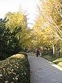 The most beautiful season in Beijing - panoramio - 山海风.jpg