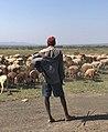 The shepherd of life.jpg