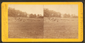 The woods from which the 2nd Mass. and 27th Indiana charged on the morning of July 3d, 1863, by Tipton, William H., 1850-1929.png