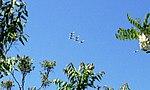 Thunderbirds practicing over the Hudson River near the George Washington Bridge.jpg