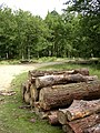 Timber stack at a meeting of tracks in the Ramnor Inclosure, New Forest - geograph.org.uk - 43395.jpg