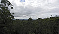Tingle forest - Valley Of The Giants - Walpole-Nornalup National Park.jpg