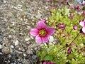 Tinyflower4.jpg