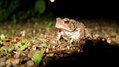 Toad in the spotlight (6014075337).png