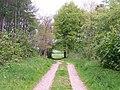 Track through church copse, looking north - geograph.org.uk - 1286477.jpg
