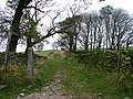 Track to Brownthwaite - geograph.org.uk - 1560685.jpg