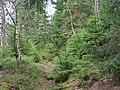 Trail at Silberteich 17.jpg