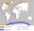 Trajet migratoire de la Sterne Arctique (Sterna paradisea).jpg