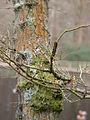 Tree (7104310219).jpg