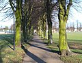Tree lined footpath across Victoria Park - geograph.org.uk - 1112764.jpg