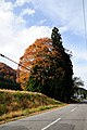 Tree of Totoro (Ver.Y) (5171147460).jpg