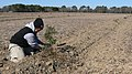 Tree planting at habitat restoration project (8002924278).jpg