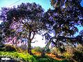 Trees (5398314293).jpg