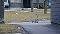 Tricycle - Guelph, Ontario.jpg
