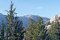 Tsuga mertensiana Pinus monticola Crown Lake.jpg