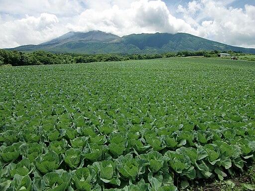 Tsumagoi Cabbage&Asamayama