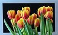 Tulpen vor Fernseher.jpg