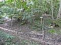 Tumulus celte - panoramio.jpg